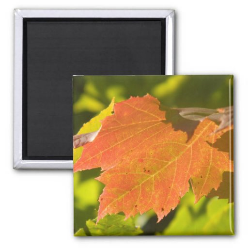 One Autumn Leaf Magnets