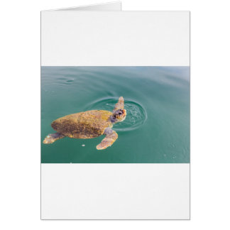 One big swimming sea turtle Caretta Card