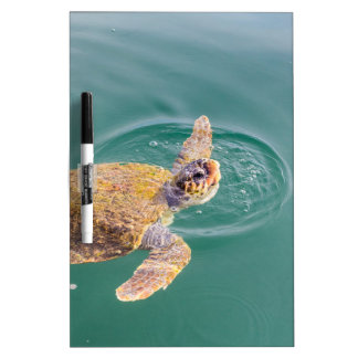One big swimming sea turtle Caretta Dry Erase Board