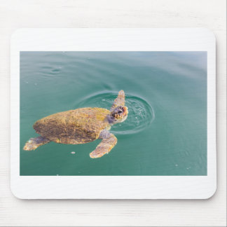 One big swimming sea turtle Caretta Mouse Pad