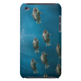 One black sea bass leading a school iPod touch Case-Mate case
