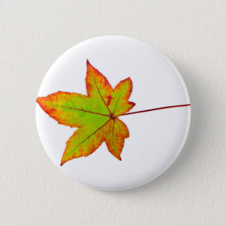 One colorful maple leaf in autumn on white 6 cm round badge