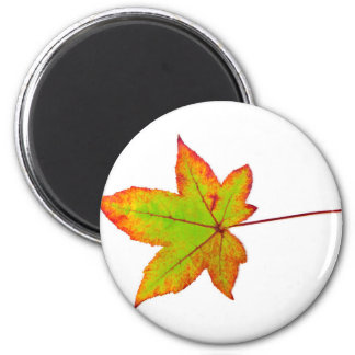 One colorful maple leaf in autumn on white 6 cm round magnet