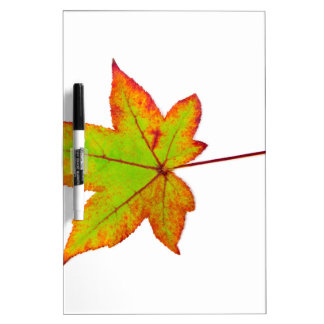 One colorful maple leaf in autumn on white dry erase board