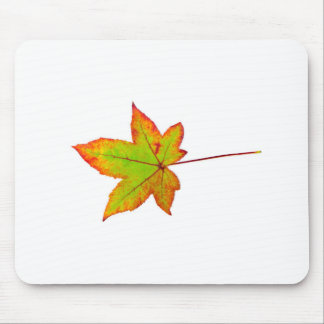 One colorful maple leaf in autumn on white mouse pad