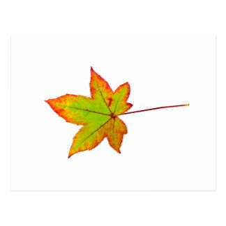 One colorful maple leaf in autumn on white postcard