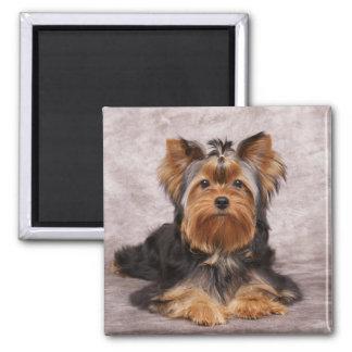One dog magnet
