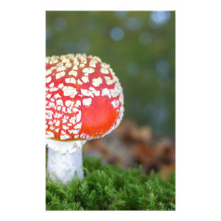 One fly agaric with green moss in fall season personalised stationery