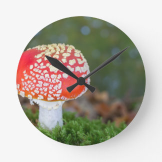 One fly agaric with green moss in fall season round clock