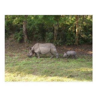One horned rhinoceros Chitwan National Park Nepal Postcard
