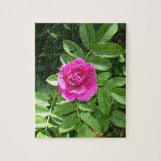 One Lovely Rose Bloom Puzzles