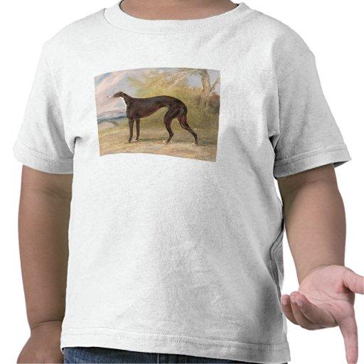 One of George Lane Fox's Winning Greyhounds: the B Shirts
