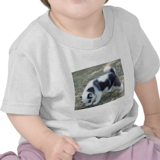 One of our super unique Husky puppies! Tshirts