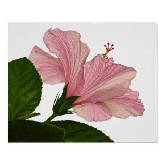 One Pink Hibiscus Print
