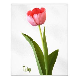 One Pink Tulip Photo Art
