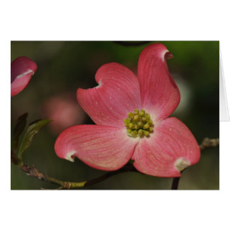 One Red Dogwood Bloom Greeting Card