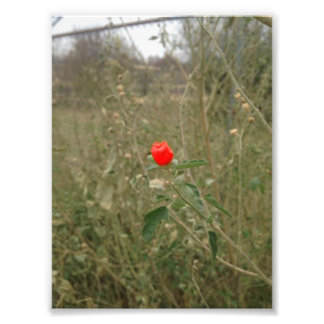 One Red Flower Print