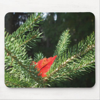 One Red Maple Leaf in a Pine Branch Mouse Pad