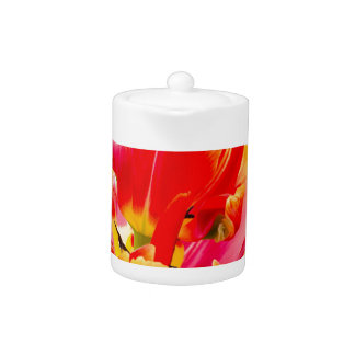 One red tulip flower on white background