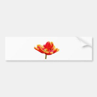 One red tulip flower on white background bumper sticker