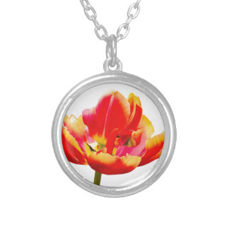 One red tulip flower on white background silver plated necklace