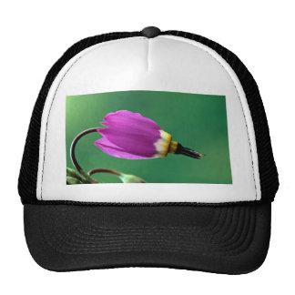 One shooting star flower against green trucker hats