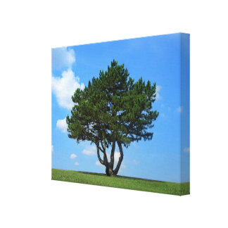 One Tree Full of Life, a Blue Sky & White Clouds Canvas Print