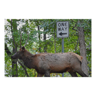 One Way Defeated Young Bull Elk Mating Season Poster