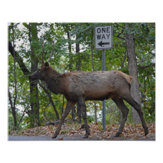 One Way Subordinate Rut Weary Young Bull Elk Poster