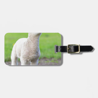 One white newborn lamb standing in green grass bag tag