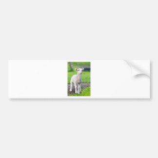 One white newborn lamb standing in green grass bumper sticker