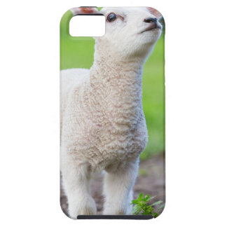 One white newborn lamb standing in green grass case for the iPhone 5