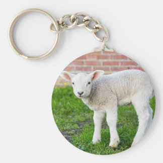 One white newborn lamb standing in green grass key ring