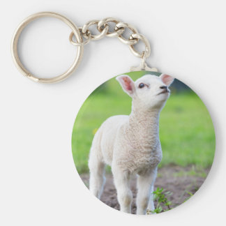 One white newborn lamb standing in green grass key ring