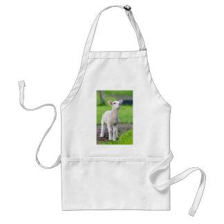 One white newborn lamb standing in green grass standard apron