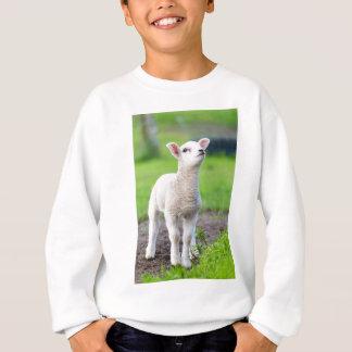 One white newborn lamb standing in green grass sweatshirt