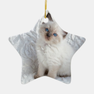 One young ragdoll cat sitting on fur in chair ceramic ornament