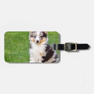 One young sheltie dog sitting on grass bag tag
