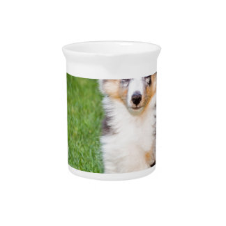 One young sheltie dog sitting on grass beverage pitcher