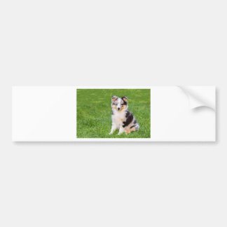 One young sheltie dog sitting on grass bumper sticker
