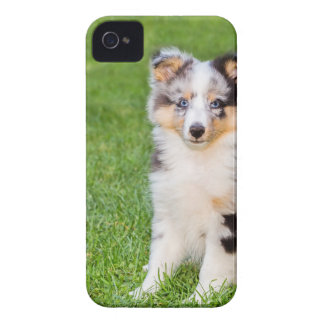 One young sheltie dog sitting on grass Case-Mate iPhone 4 cases