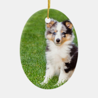 One young sheltie dog sitting on grass ceramic ornament