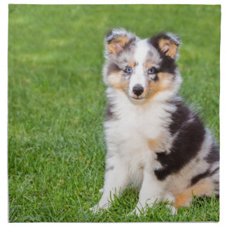 One young sheltie dog sitting on grass cloth napkin