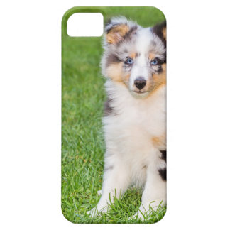 One young sheltie dog sitting on grass iPhone 5 cover