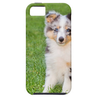 One young sheltie dog sitting on grass iPhone 5 covers
