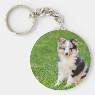 One young sheltie dog sitting on grass key ring