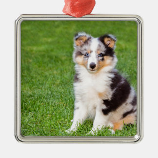 One young sheltie dog sitting on grass metal ornament