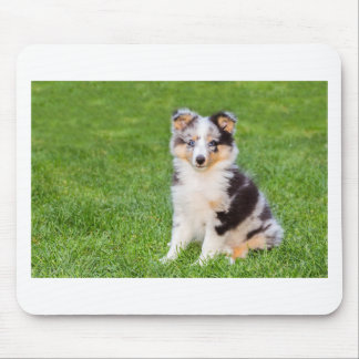 One young sheltie dog sitting on grass mouse pad