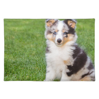 One young sheltie dog sitting on grass place mat