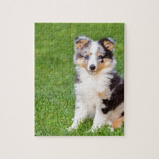 One young sheltie dog sitting on grass puzzle